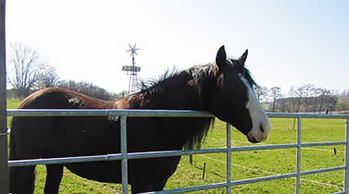 Verstellbare Weidetore für Pferde und Rinder